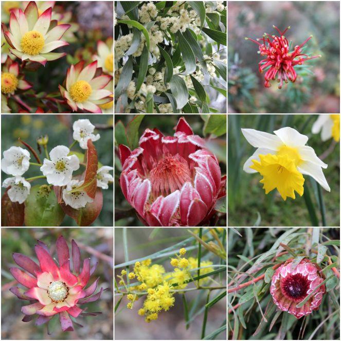 Flora (MtTomah)
