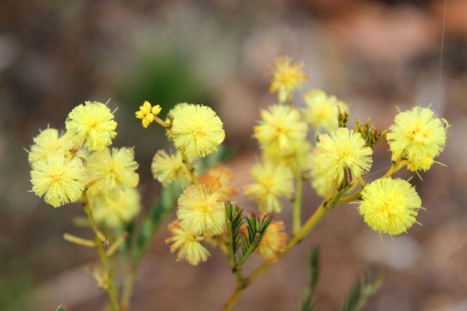 Flora9